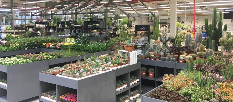 HERBRÜGGER: Pflanzen für innen & außen